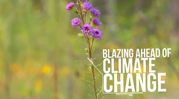 Blazing Ahead of Climate Change